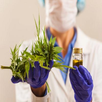 V Curso sobre Cannabis Medicinal